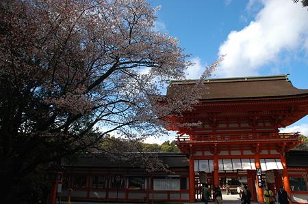 楼門と山桜・下鴨神社