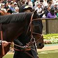 Photos: 5R新馬 サトノペガサス アップ