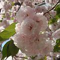 写真: 里桜