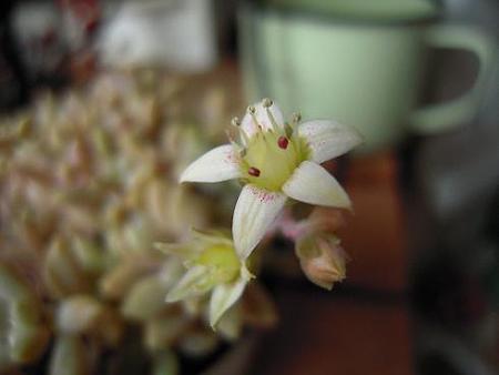 姫秋麗のお花