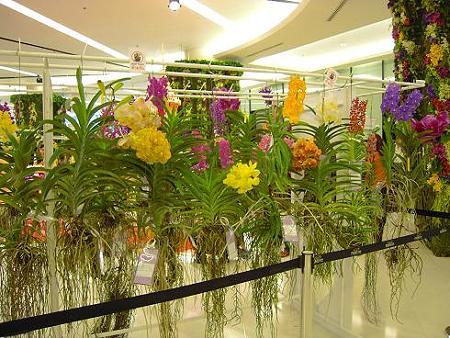 バンコク・パラゴンでのランの花の祭典