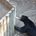 展示施設を豪快に破壊するマレーグマ