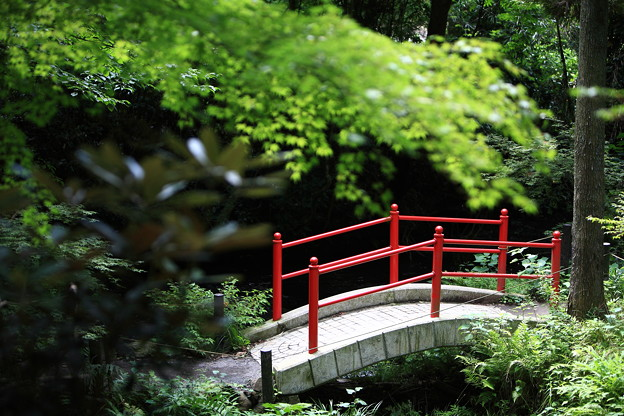 写真: 『架け橋。。。』