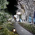 写真: 新宿サザンテラスイルミネーション2009