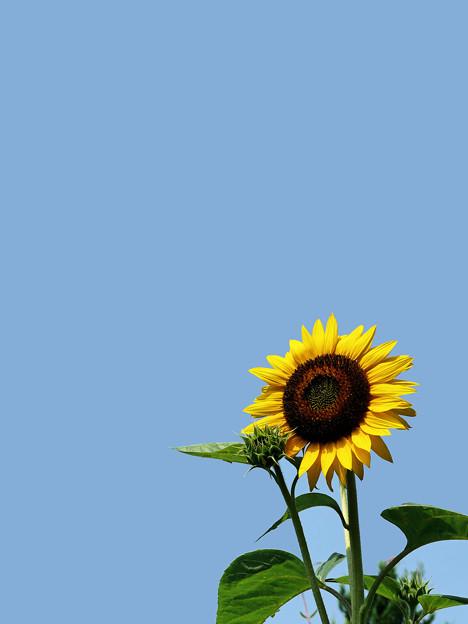 8月の「太陽」