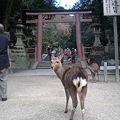 Photos: ようこそ春日大社へ