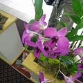 写真: 玄関近くの花