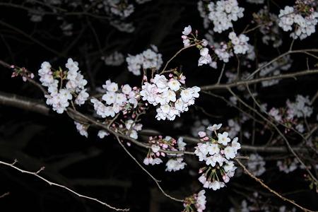 2010.04.04 夜桜(1/3)