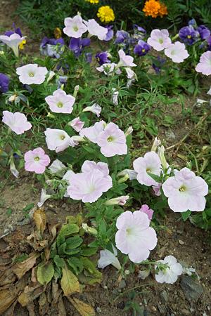 Flower07022011sd15-07