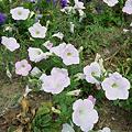Photos: Flower07022011sd15-07