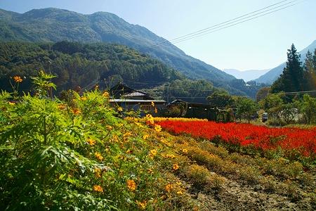 福徳寺からみえる風景2(SDIM0144)