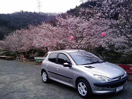 206と桜