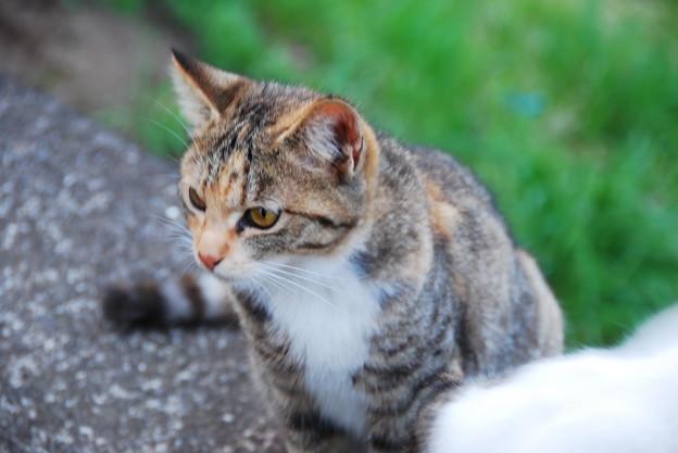 ガードマン猫