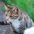 Photos: ガードマン猫