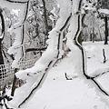 写真: 雨氷に樹氷?