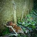 Photos: 地グモの巣