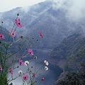 秋桜と山霧
