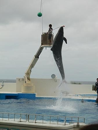 ちゅらうみ水族館イルカショー2150