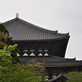 写真: 勧進所から眺める大仏殿