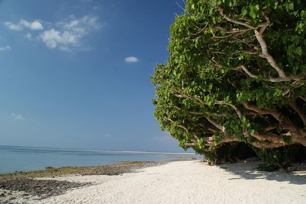 カイジ浜のやすらぎ 竹冨島のクリスマス