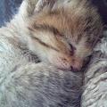 Photos: 寝顔は可愛いなぁ~~♪