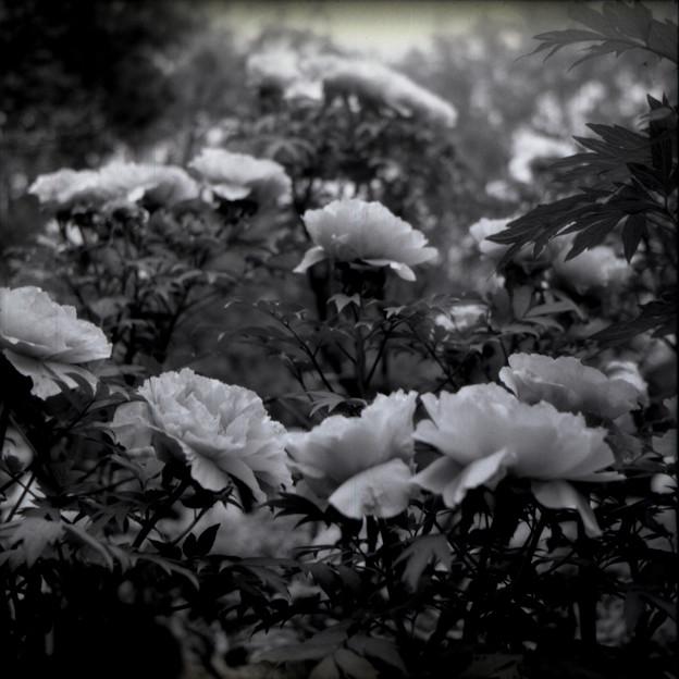 花たちの会話