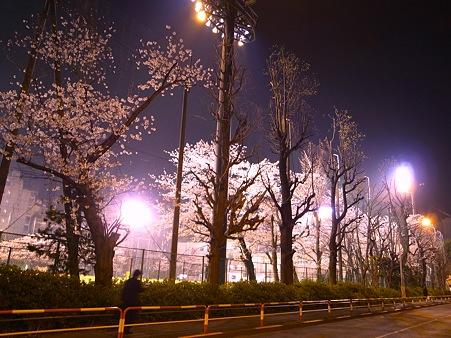 池袋サンシャイン近く総合体育場の桜