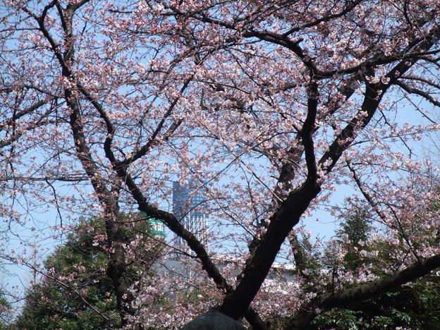 Photos: 両国横綱町公園