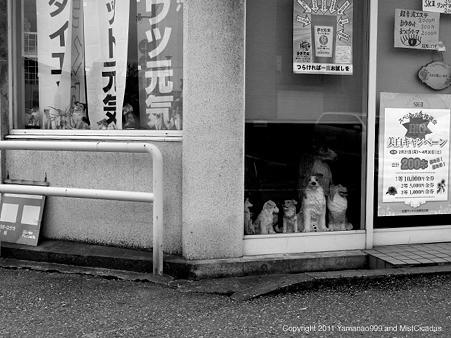 107_kanazawa ishikawa