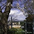Photos: 鴨川、桜まみれ11