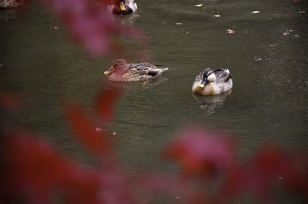 Photos: 2010京都植物園秋09
