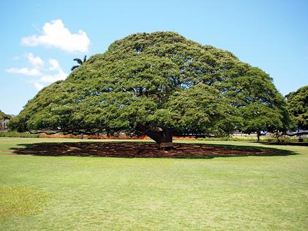 100424_Hawaii05