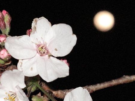 月と桜 G10