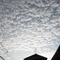 写真: 20100918_iwasigumo