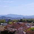 写真: 常寂光寺からの眺め