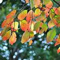 智光山公園 紅葉