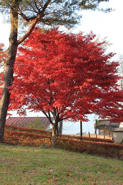 写真: 山中湖3