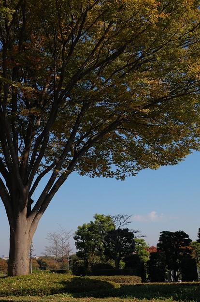 写真: 20101106_110204