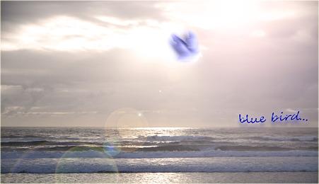 Blue Bird  Cocco・・・。