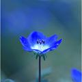 写真: 瑠璃色の地球・・・。