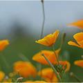 Photos: orange・・・。