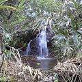 Photos: 山奥の小さな滝