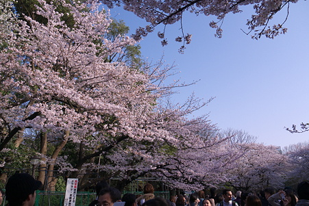 花見日和の上野公園