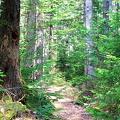 Hemlock Ridge Trail