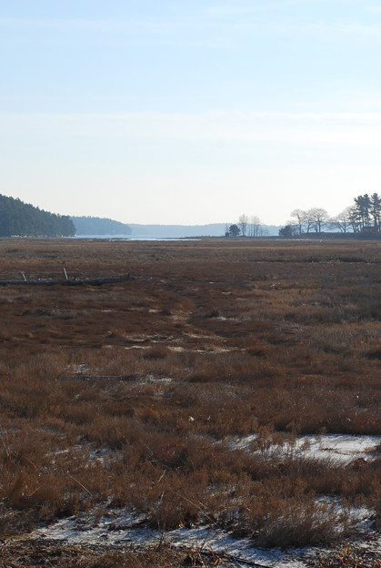 Thomas Point Salt Marsh