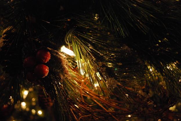 Photos: The Christmas Tree No.1
