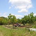 Photos: 栗の木とトラクター