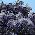 Photos: 2009-04-26-12-42-01_0022