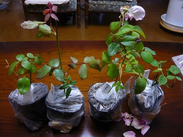 4本のバラ