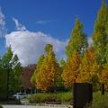 Photos: 秋色と秋の空